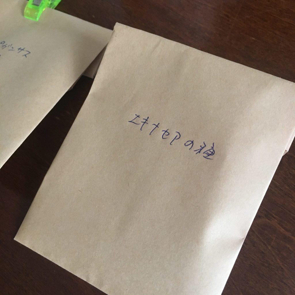 エキナセアの種封筒